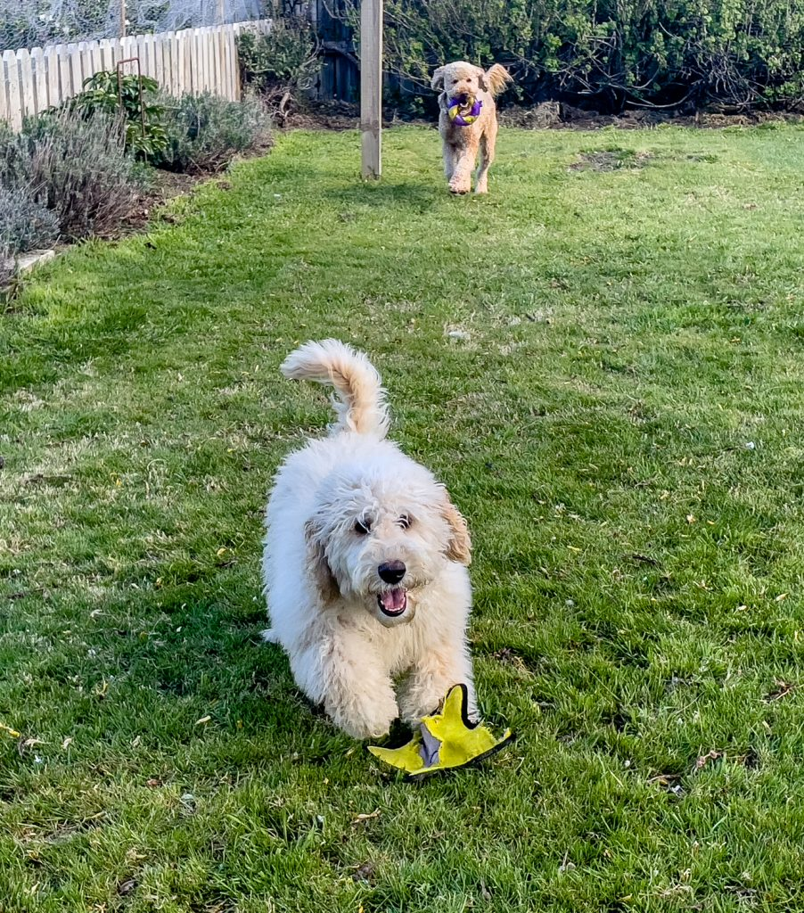 Photo of <nobr>Pen-y-bryn</nobr>'s Dogs
